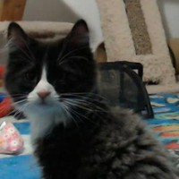 kitten_cam_ash2
