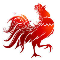 rooster3